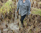 Alicia tried harvesting traditionally to experience life of a farmer in Ba'Kelalan