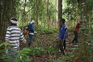 Community clean-up (gotong royong) held in Jeli to clear plantations of undergrowth