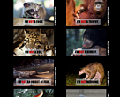 Anti-poaching ads