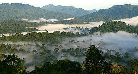 Forest range within the Heart of Borneo rel=