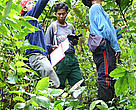 WWF staff doing ground truthing to assess tree species and ground surveys to determine orang-utan distribution and density