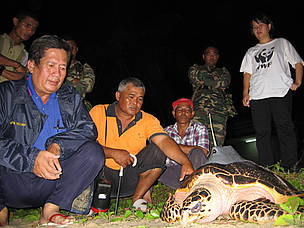 A hawksbill turtle attached with a satellite transmitter at Kem Terendak with the cooperation of ...  	© WWF-Malaysia/Lee Chuen Yap