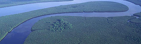 Aerial view of the Kinabatangan river in Sabah  rel=