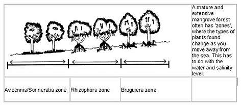 A mature and extensive mangrove forest often has 'zones', where the types of plants found change as ... rel=