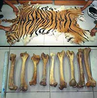 TRAFFIC investigators found the parts of an estimated 23 tigers for sale