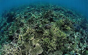 Coral Reefs in Tun Mustapha Park, located in the Kudat-Banggi Priority Area in Sabah - home to the second largest concentration of coral reefs in Malaysia