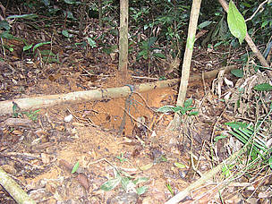 Proof of human disturbance such as animal traps like these were also found all throughout the surveyed areas.