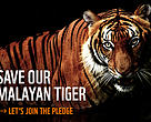 Save our malayan tiger
