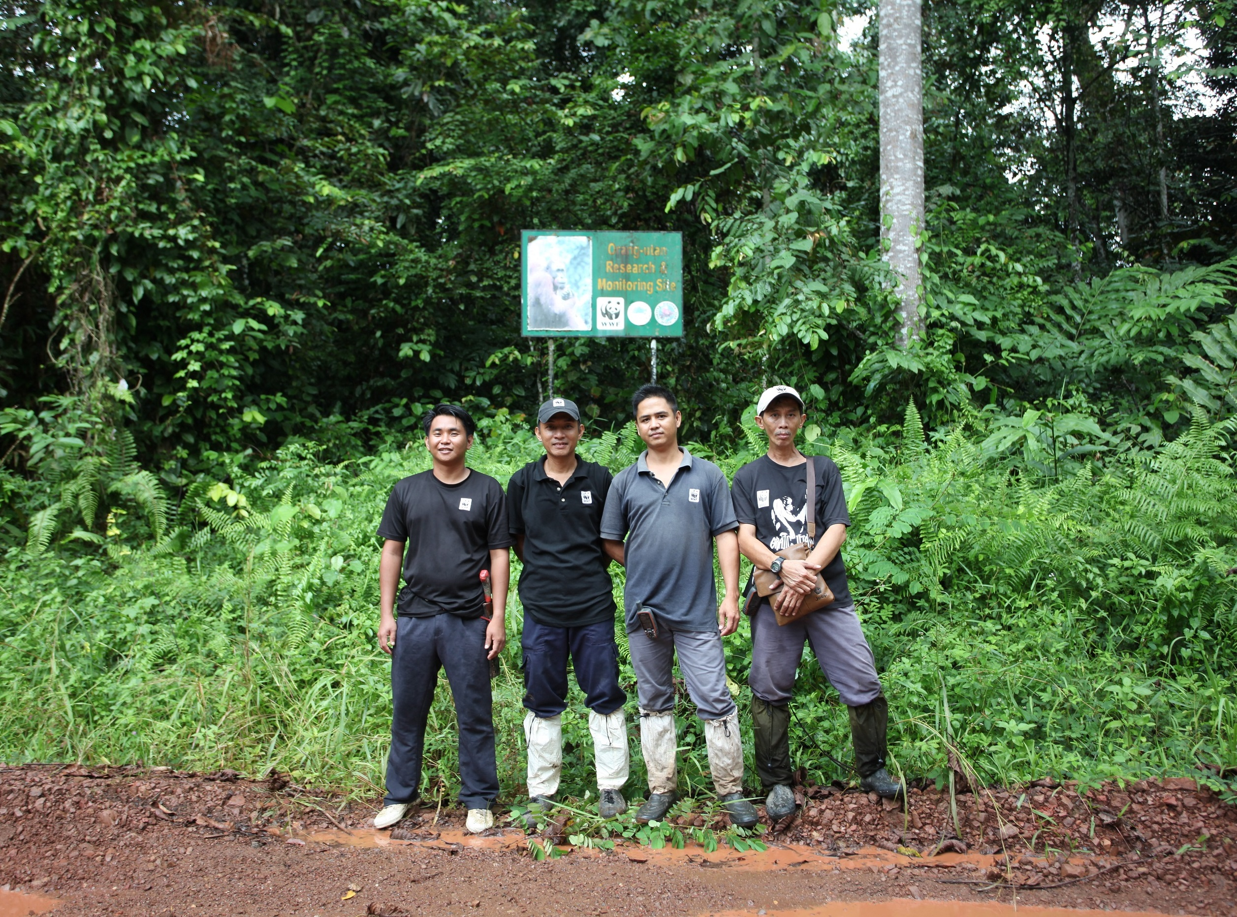 Bukit Piton: A Case of Reforestation Success | WWF Malaysia